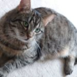 """Bramley Is Missing from Rathfarnham  since 20th March 18 **Good News - Home Safe!"""""""