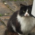Black & White Cat Found in Templeogue - April 18