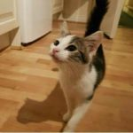 Cleo Is Missing from Clonskeagh - April 18