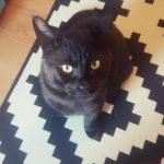 Meet Ivan! (Homed)