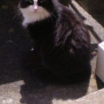 Fonzy is missing from Castleknock, April 18
