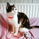 Zaffy Is Missing From Celbridge since 26th April. **Good News - Zaffy is home safe**