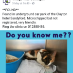 Friendly Cat Found at Clayton Hotel Sandyford - May 18