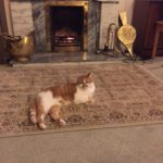 Ginger and White Freddy Needs a New Home - May 18