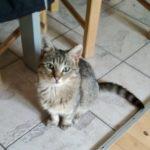 Meet Alfie! (Homed!)