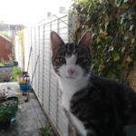Tabby & White Male Cat Found in Drimnagh - May 18 **Good News - Reunited in Sep with his owners!""