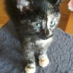 Meet Amber!