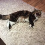 Gorgeous Cat Needs a New Home!