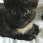 Meet Tia Maria! (Homed)