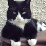 Gbay Urgently Needs a New Home.
