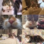 Nelly is missing from Celbridge June 18