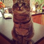 Poppy is missing from Kimmage since June 3rd/4th **Poppy is now home safely**