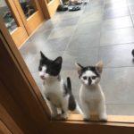 Meet Arthur and James!