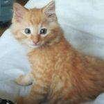 Meet Teddy!