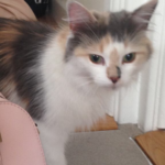Small Tortie found in Clontarf July 18