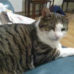 Casper is missing from Stillorgan since July 11th