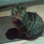 Jessie is missing from Foxhill Drive since July 7th