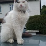 Jinx Is Missing from Terenure since July 21st