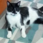 Missing from Castleknock since July 25th
