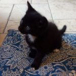 Meet the Potty-Potter Kittens! Only one left: Potter!(All homed)