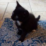 Meet the Potty-Potter Kittens!