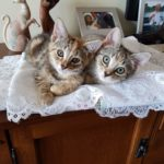 Meet Poppy & Pippa! (Homed)