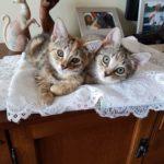 Meet Poppy & Pippa!