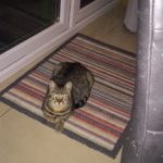 Friendly Tabby Cat Found In Clongriffin - Sep 18
