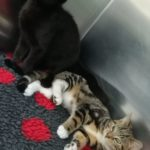 Meet Nero & Dora! (Homed)
