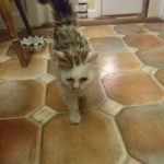 Kitten Found In Swords - 13th Sep 18