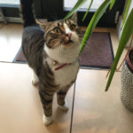 Missing From Beechwood Ranelagh, since Sep 1st. **Home Safe!**