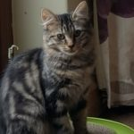 Meet Beautiful Bonnie! (Homed!)