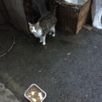 Young Friendly Stray Cat Needing A New Home - Oct 18