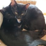 Lola and Molly are missing from Artane/Harmonstown - Early Oct