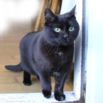 *** REUNITED 31ST OCT***  Small Female Black Cat Missing from Celbridge since 1st Oct