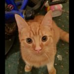 Ginger Male Missing from Coolock since Friday 5th Oct