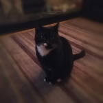 Peppy is missing from Palmerstown since 18th November