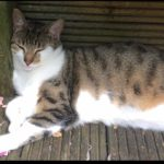 Tilly is missing from Crumlin since early November