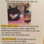 Seve is missing since December 1st from Kilmacud