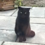 Beautiful Friendly Black Cat for Re-homing - Dec 18