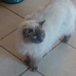 Lily is missing from Killiney Co Dublin since 20th Dec