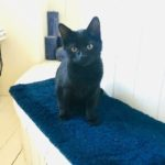 Loki is missing from Holywell Estate Dundrum - December 18