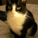 Archie is Missing from Crumlin since 27th November