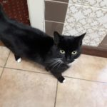 Friendly Black Female Cat Found in Gormanstown Co Meath