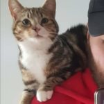 Missy is missing from Raheny since Jan 2nd **Home safely**