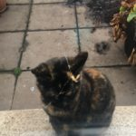 Tortie Found in Terenure in Jan 19