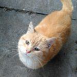 Meet Jaffa! Special Appeal!