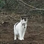 Missing since Halloween from Knocklyon Dublin 16