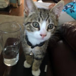 Male Tabby Kitten Missing from Old Bawn since Dec 26th