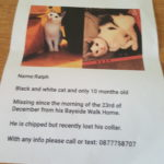 Ralph is Missing Since 23rd December